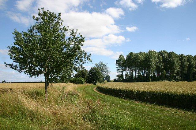 Footpath to Wickhambrook