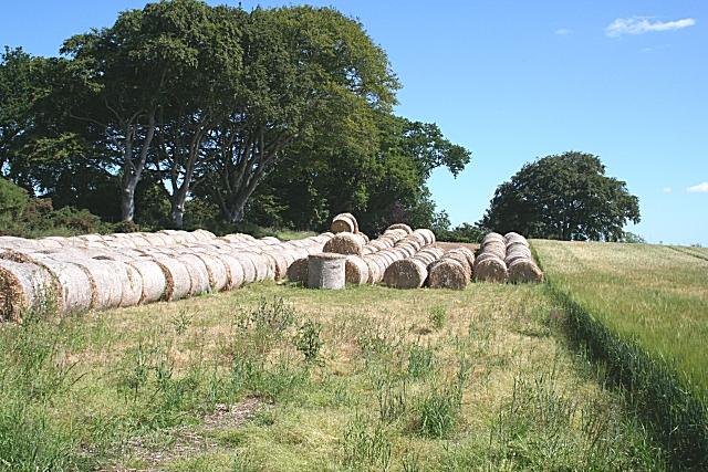 Straw Bales at Pitairlie