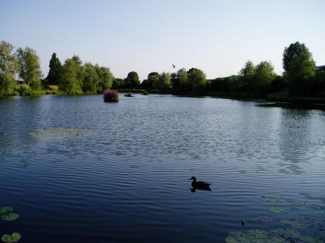 Barnwell Lake