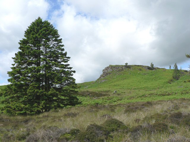 Moorland beside Loch Ordie