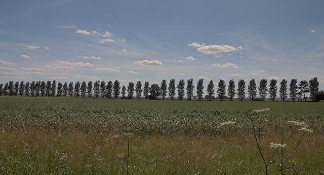 Poplars NW of Welburn