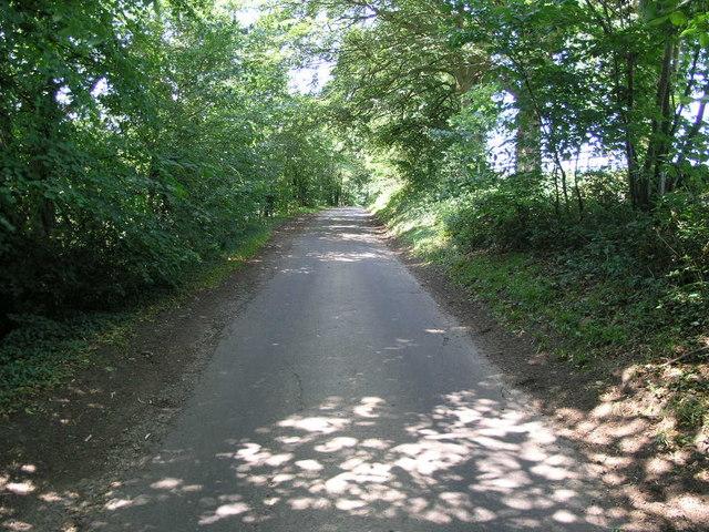Dappled Avenue