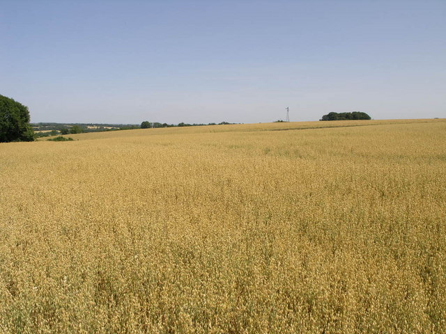 Yellow Field and Wind Pump