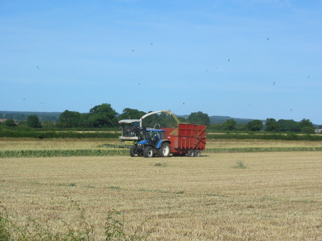 Combine harvester and tractor working adjacent to Westgate Carr Road