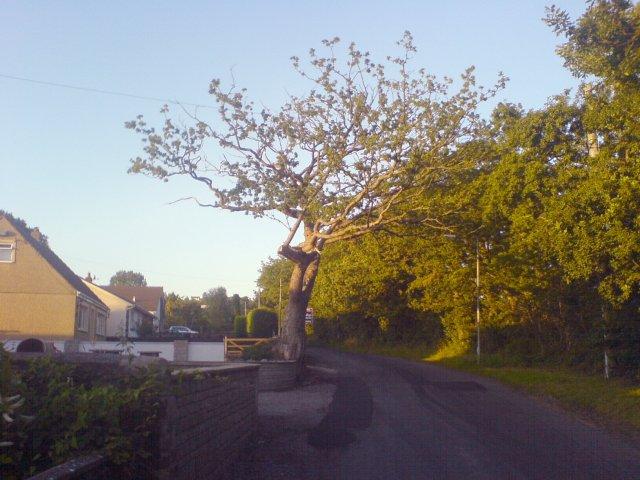 A tree on Heol Ddu road