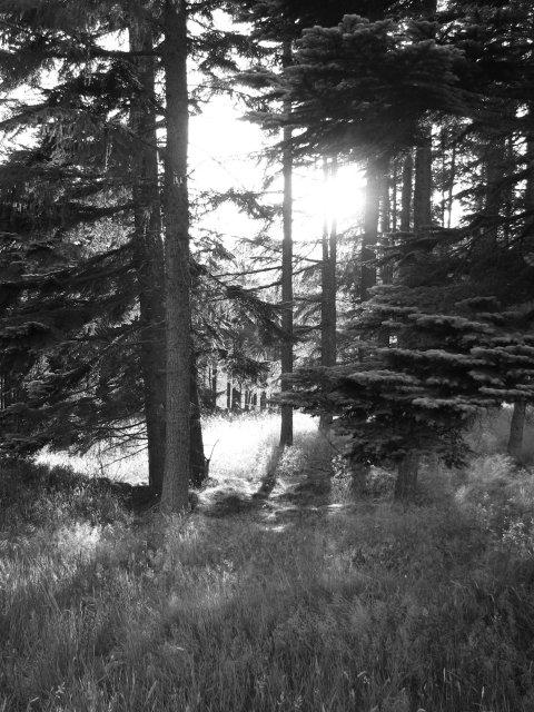 Corsincon Wood