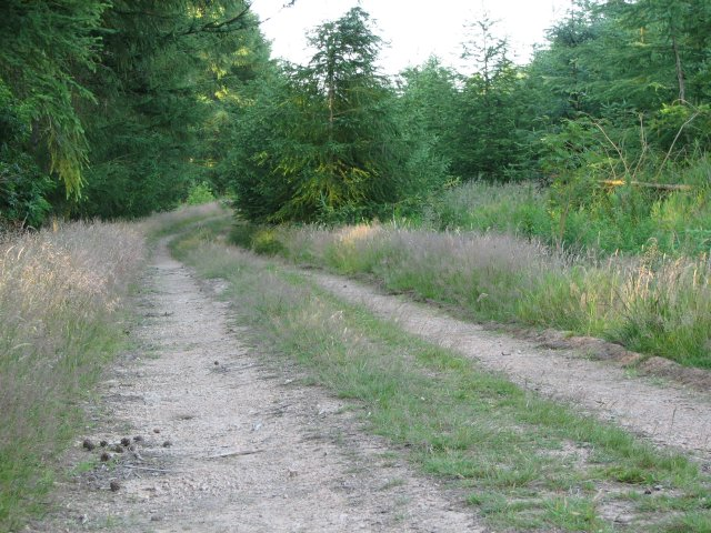 Track to Southhill Wood