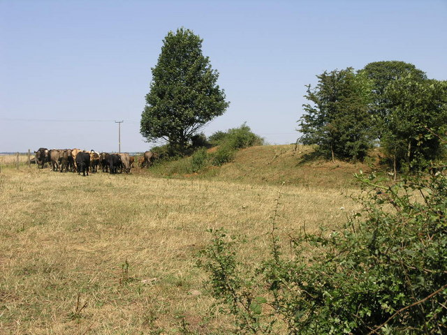 Cattle and Fort