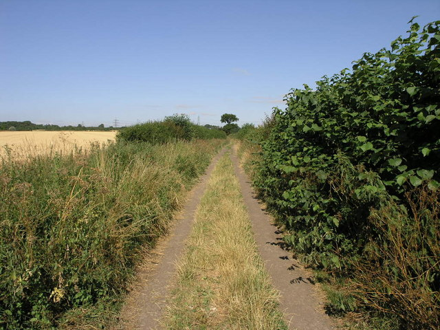 Tree in a Lane