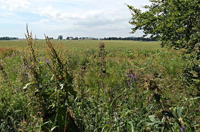 Leuchars Castle farmland