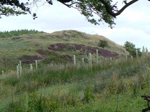 Annie's Hill