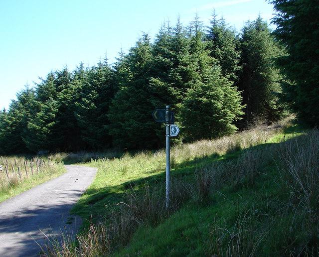 Diverging pathways near Cyfannedd-fawr