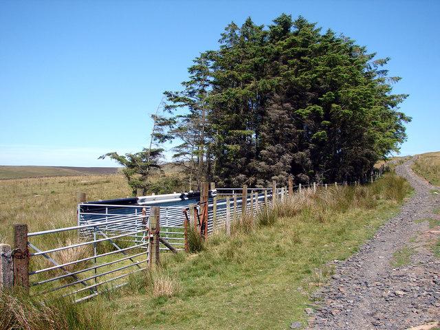 Sheepfold near Cae'rmynach