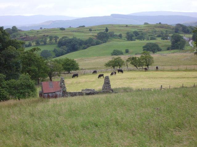 Farmland near Ffridd-y-foel