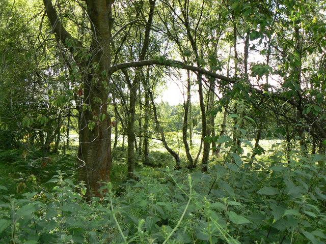 In Torr Wood