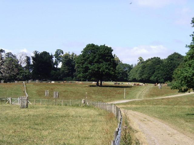 Parkland at Godinton, near Ashford