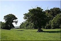 SW9775 : Meadow near Gut Bridge by Tony Atkin