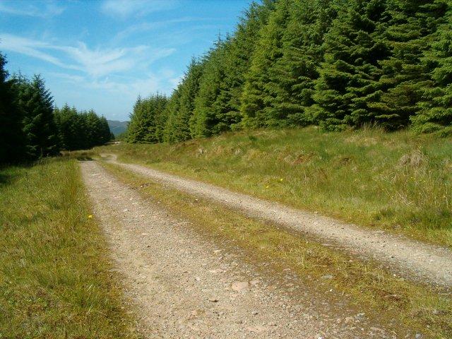 Track in Eredine Forest