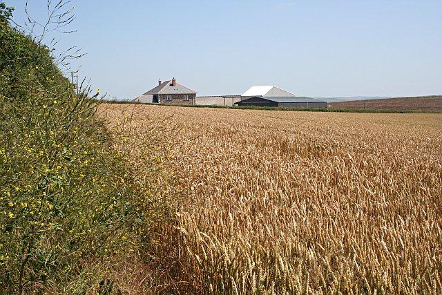 Wheatfield and Farmhouse
