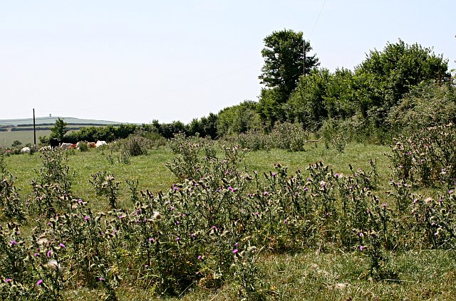 Thistles and Pasture