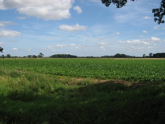 Towards Day Hills Plantation