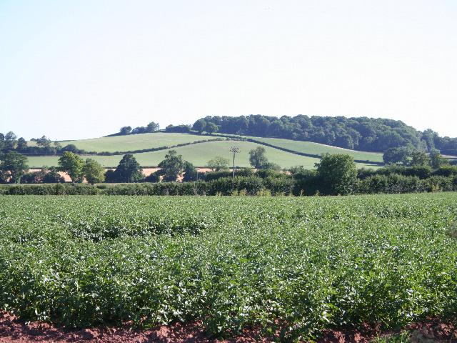 Potato Field near Pool Head