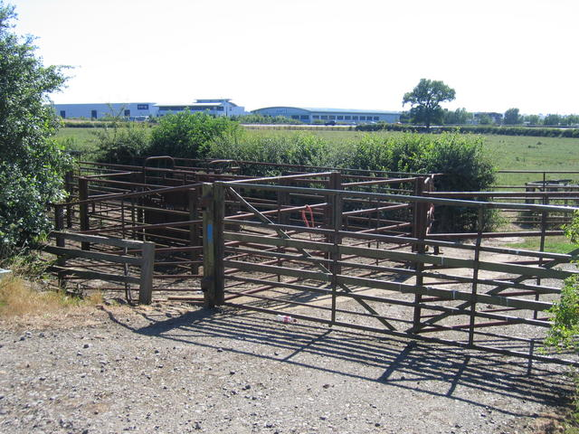 Cattle pens and technology
