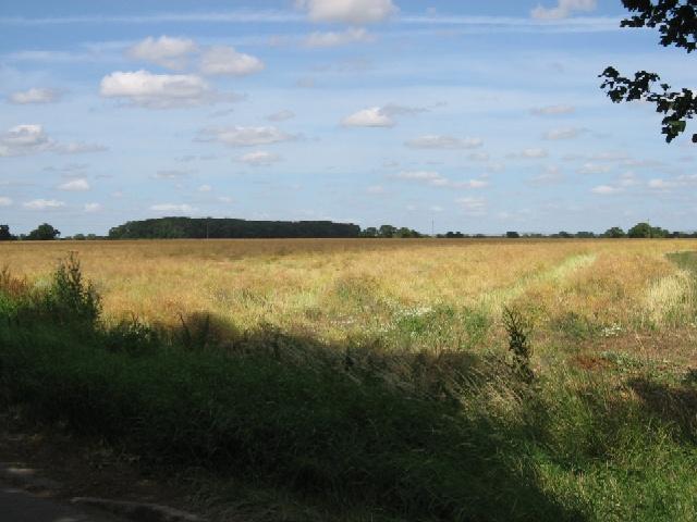 Barley Field and Wood