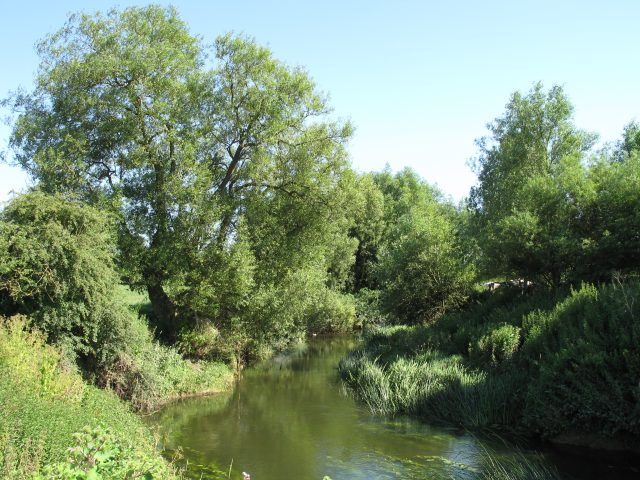River Avon near Lacock