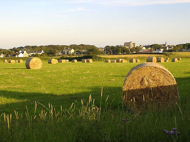 Field near Castletown, Isle of Man