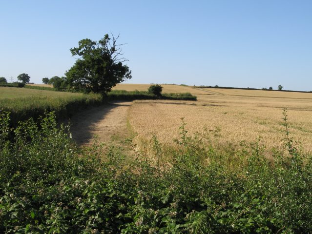 Cereal crops and hedgerows