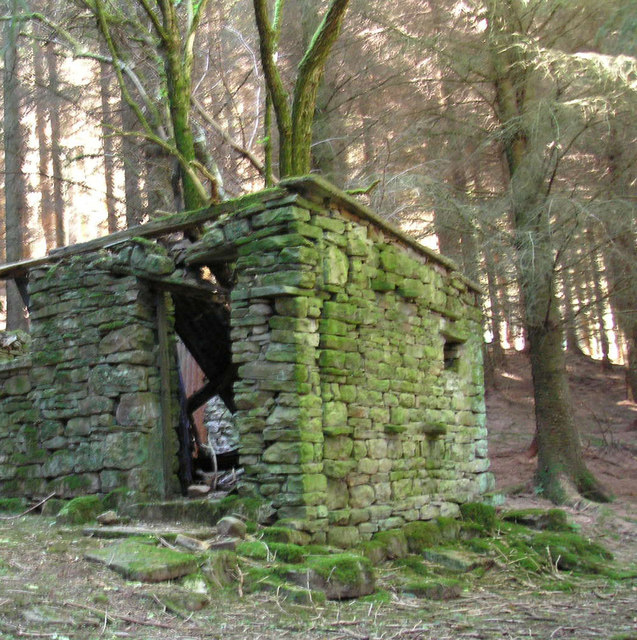 Dereliction in the woods