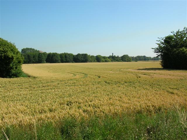 Fields belonging to Barlby Farm