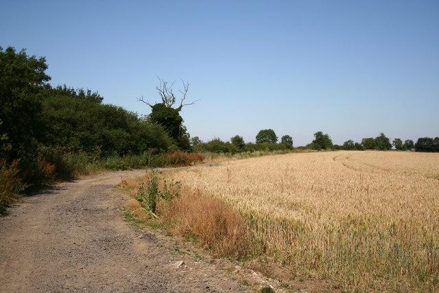 Wooden Lane