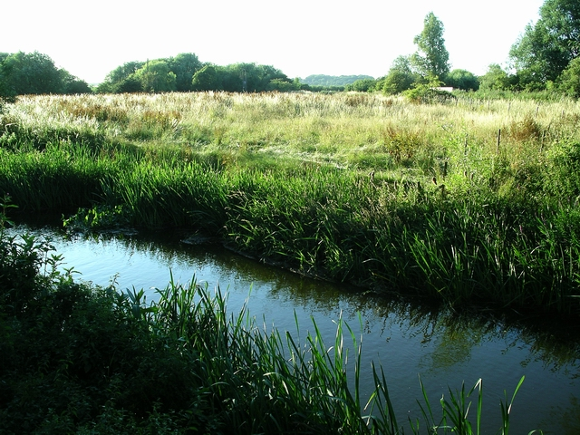 Stream, Attenborough Nature Reserve