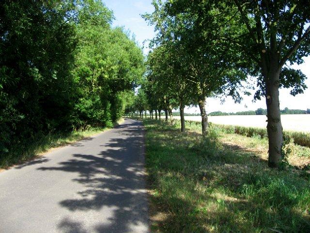 A Fine Avenue of Trees