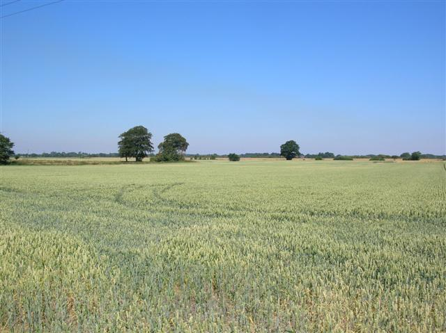 Farmland near Barmby on the Marsh