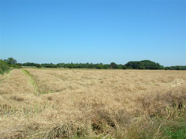 Farmland close to Knedlington