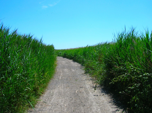Track through the marshes, White Dyke