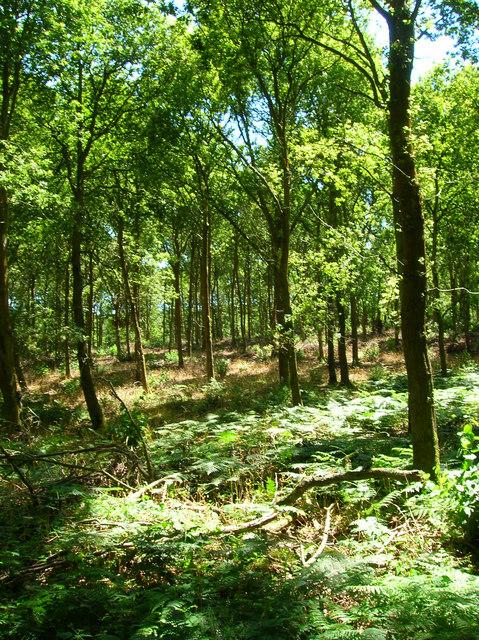 Abbots Wood