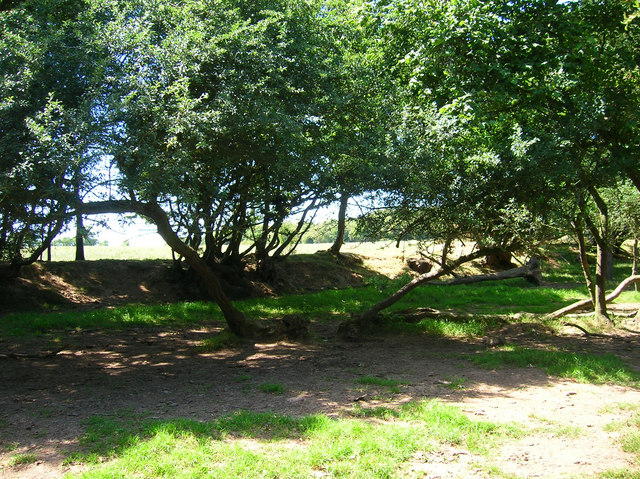 Old Boundary, Mill Wood