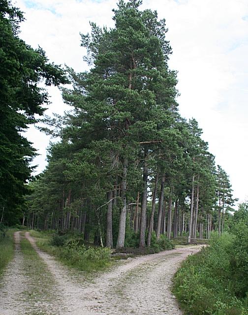 Forest road junction