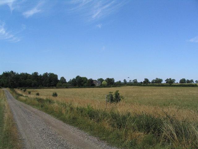 Track running NE to Lodge Farm