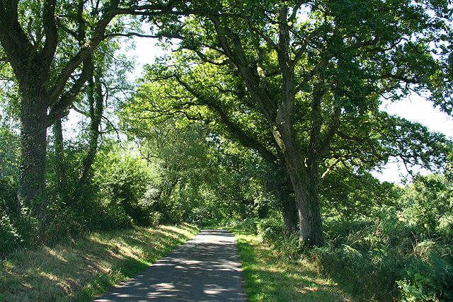 Northlew: lane from Hatherleigh