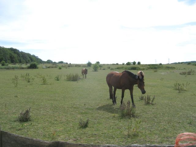 Paddock, Hook Green