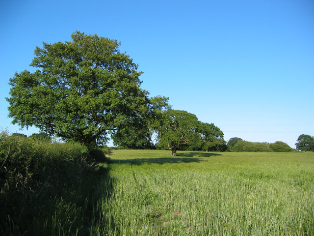 Young barley, near Blackhurst Farm