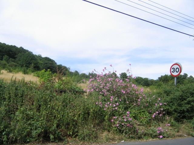 field below Rowhill Mount