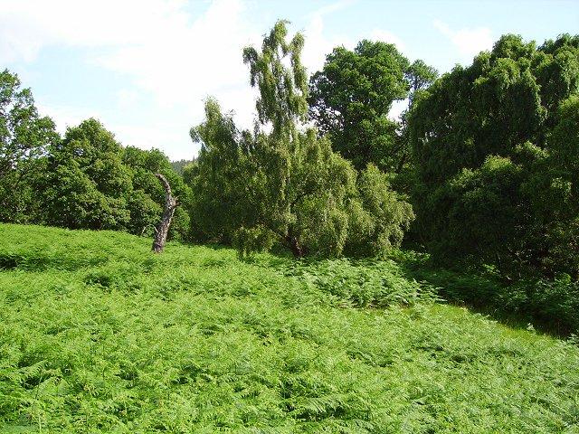 Forest near Loch Achilty