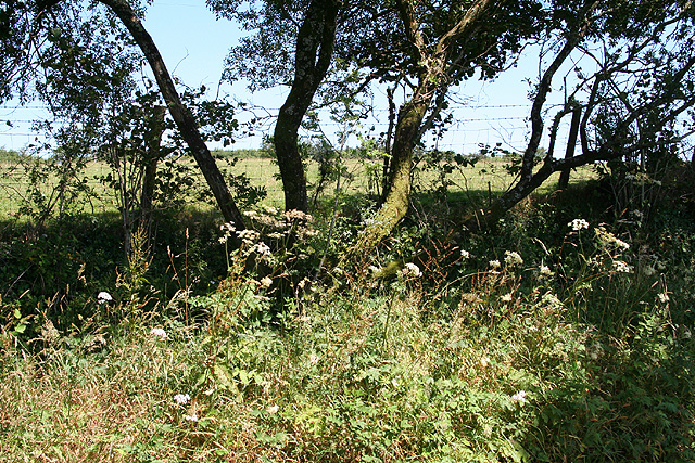 Okehampton Hamlets: near Kigbeare Cross