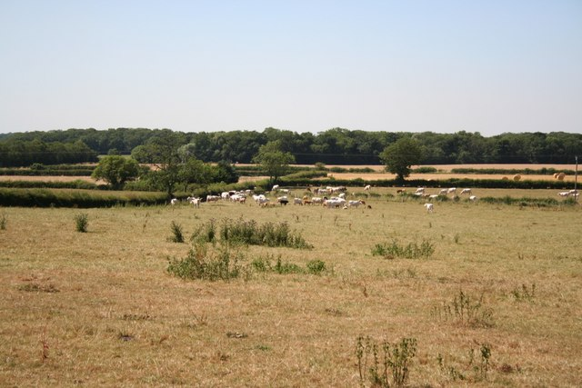 Pasture at Kexby